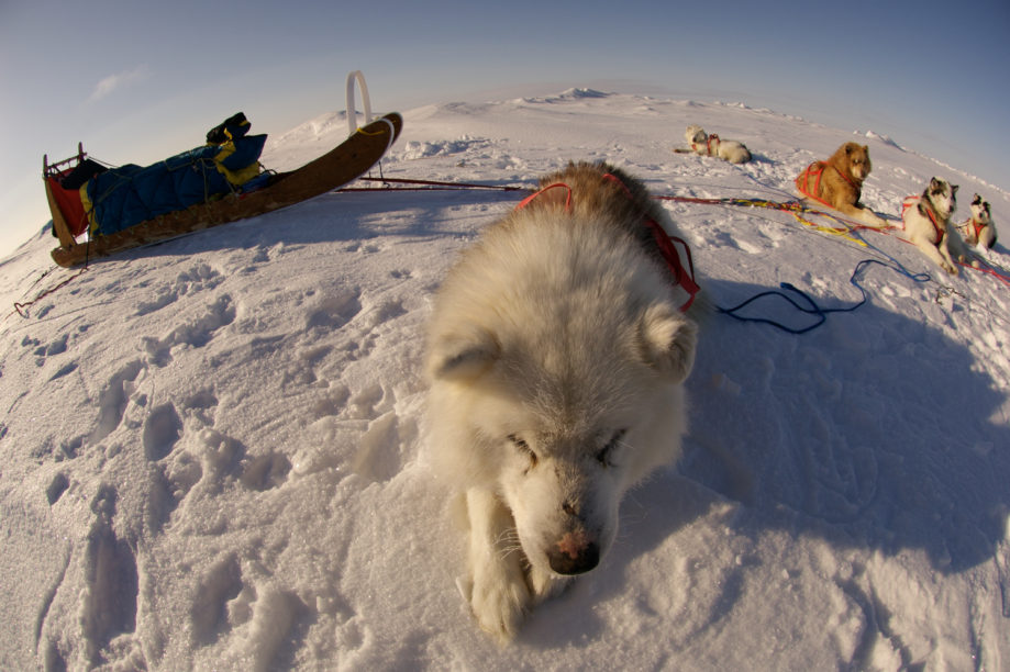 Speed record to the North Pole, dog sledding
